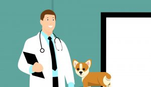 vet with your pet