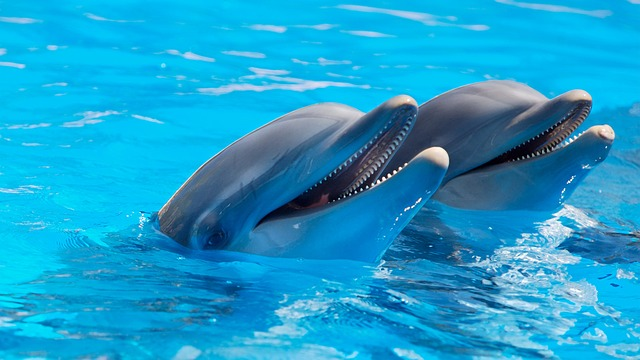 A park with dolphins that could be great reason to spend a day in Dammam