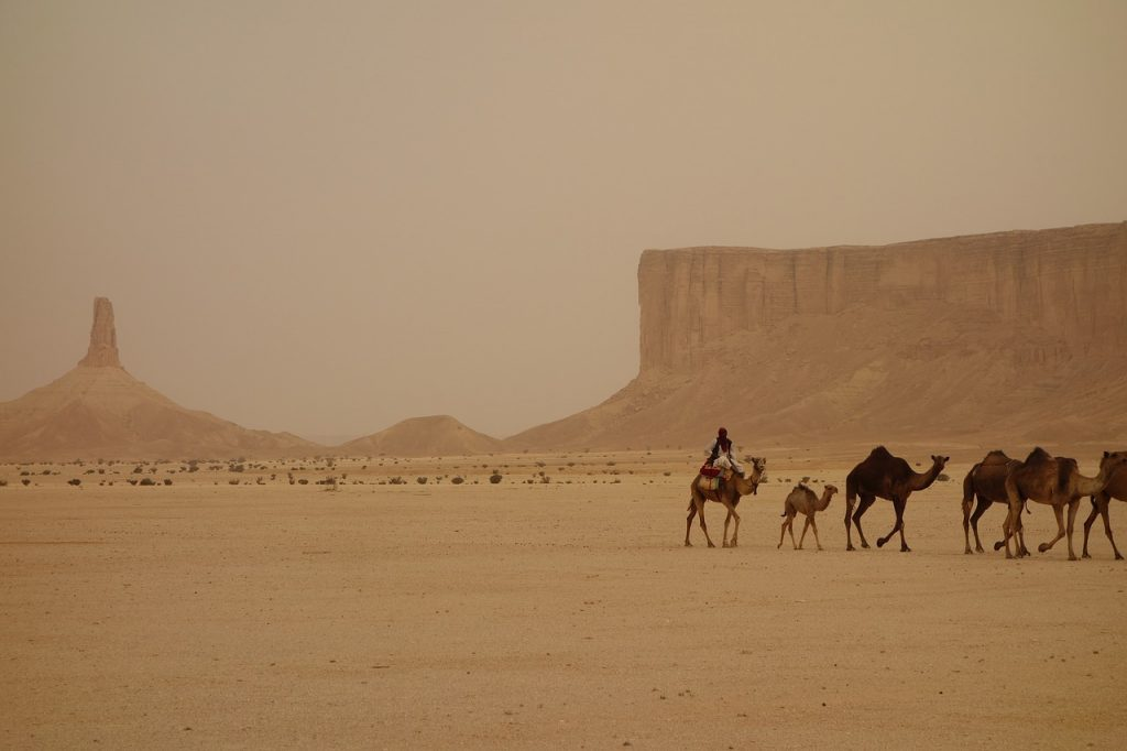 Camel train in the Saudi Arabia desert - one of the ways to prepare for moving to a warmer climate