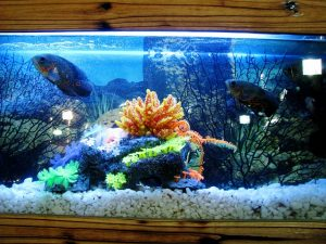 packing and moving a fish tank