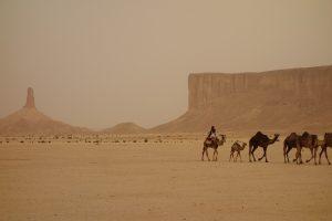 Picture of a camel caravan