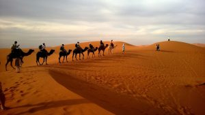 Picture of camel caravan. What to expect after moving your business in terms of weather?