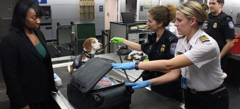 Luggage checks - things that customs can do